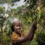 In Eastern DRC, Ex-Fighters Make a New Life With Coffee
